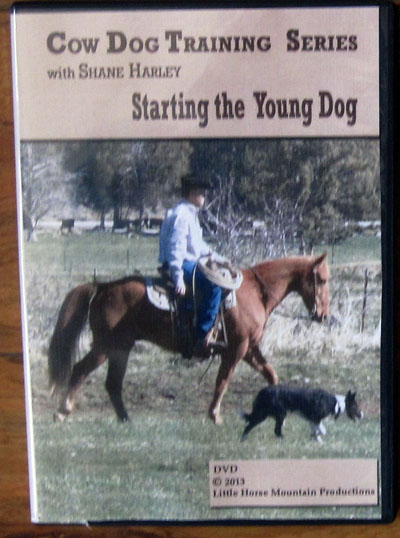 Harley Young Dog DVD